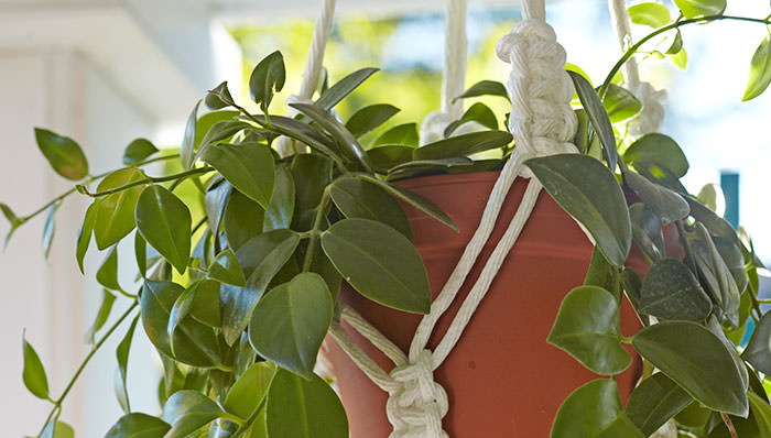 A plant in a macrame plant hanger