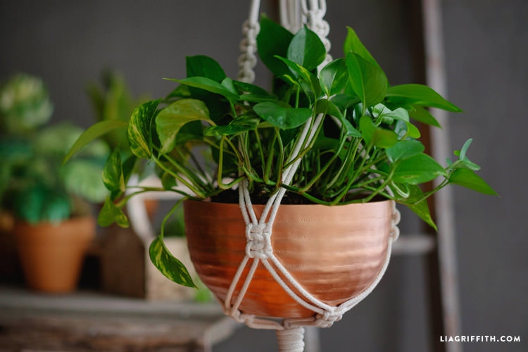 A plant in a brass planter held by a DIY macrame hanger